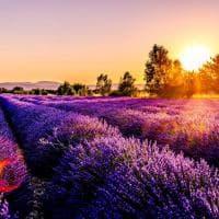 """Dalla Provenza all'Arizona, 10 luoghi per scoprire """"ultra violet"""", il colore dell'anno"""