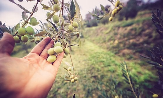 Agroalimentare, sfiora 35 mld il business delle cooperative
