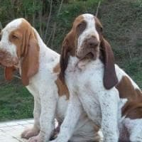 Filippine, decine di cani morti per un trasporto tragico: 90 anni di carcere al ...