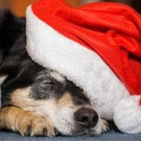 Regalare cuccioli per Natale? Meglio pensarci bene