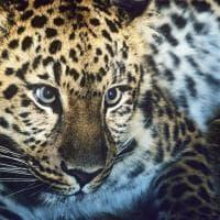 La mappa dell'estinzione del Wwf: 16 specie a rischio entro la fine del 2018