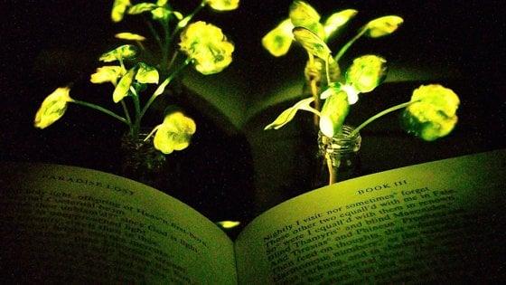 In futuro sarà possibile leggere alla luce delle piante