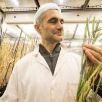 Speed breeding, piante coltivate più velocemente per la fame nel mondo