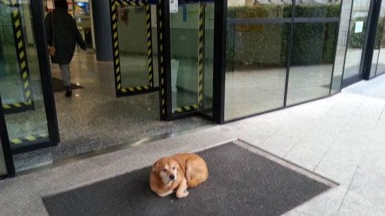 Leo, cuore di cane: aspetta per giorni il padrone fuori dall'ospedale