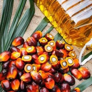 Efsa scagiona (in parte) l'olio di palma: rischi minimi solo per i lattanti
