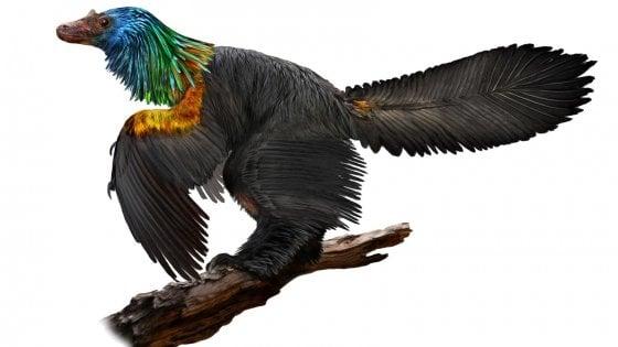 Scoperto il 'dinosauro arcobaleno': testa da velociraptor e piume da colibrì