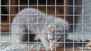 La Norvegia mette al bando gli allevamenti di animali da pelliccia