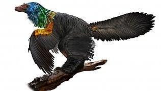 Quel pavone di dinosauroaveva un piumaggio da colibrì