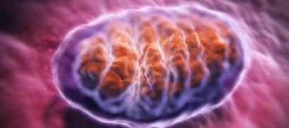 In una proteina il segreto della longevità