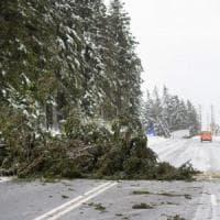 La tempesta Friederike si abbatte sul Nord Europa: nove morti tra Olanda, Belgio e...
