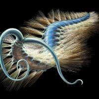 Un  esemplare di 500 milioni di anni riscrive la storia dei vermi