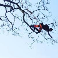 Tree climber e tree worker: i nuovi professionisti del verde al lavoro in alta quota