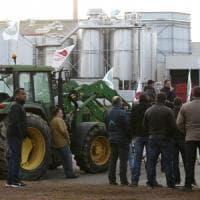 """Quote latte, la sentenza della Corte Ue contro l'Italia: """"Non ha recuperato 1,3 miliardi"""""""