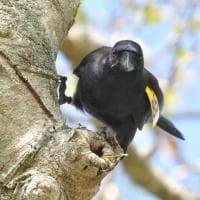 Il corvo e l'uncino: l'intelligenza paga