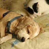 Animali, tre italiani su 10 ne hanno uno e la metà dorme nel