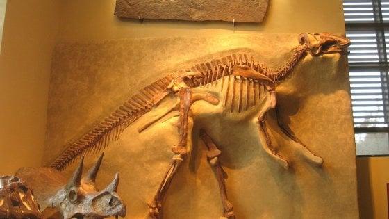 Sorpresa, i dinosauri si ammalavano proprio come noi