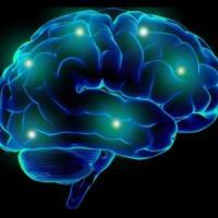 Nel cervello la centralina di controllo dell'ansia