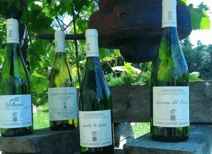 L'orgoglioso Timorasso, il vino bianco che prospera nella terra dei grandi rossi