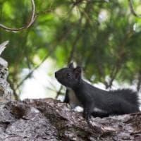 Specie invasive, l'Italia si adegua alle direttive europee