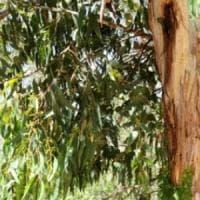 Anche gli alberi sudano: è l'effetto del cambiamento climatico