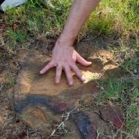 Usa, trovata lastra fossile con orme di 70 dinosauri: le immagini