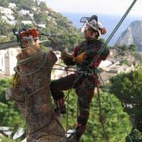 """""""Noi, acrobati del tree climbing, salviamo gli alberi nelle città"""""""
