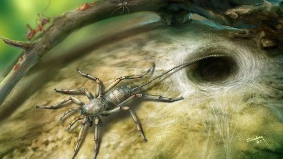 """Nell'ambra un ragno con la coda vissuto 100 milioni di anni fa. """"Potrebbe esistere ancora nelle foreste pluviali"""""""