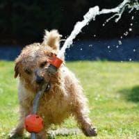 Essere ansiosi ed emotivi aumenta il rischio di essere morsi da un cane