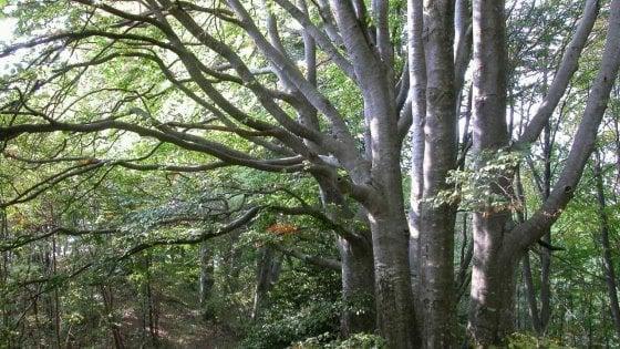 Green economy in montagna, crescono foreste e boschi certificati in Italia: 750mila ettari e mille aziende