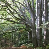 Green economy in montagna, crescono foreste e boschi certificati in Italia: