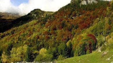 Green economy in montagna, crescono foreste e boschi certificati in Italia