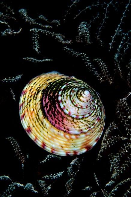 Underwater Photographer of the year, gli scatti capolavoro sott'acqua