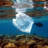 Se i pesci mangiano la plastica da abiti e creme