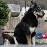 Addio a Capitàn, il cane che ha vegliato per oltre 10 anni sulla tomba