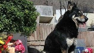 È morto Capitàn, il cane che ha vegliato per oltre 10 anni sulla tomba del suo padrone