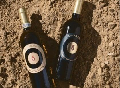 La Cantina Ancarani e quel vino fiero figlio della memoria contadina