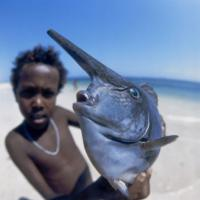 L'uomo e il mare: le fotografie di Folco Quilici