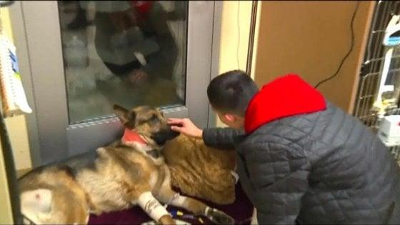Rex, il cane eroe che ha salvato il suo padrone prendendosi 3 colpi di pistola