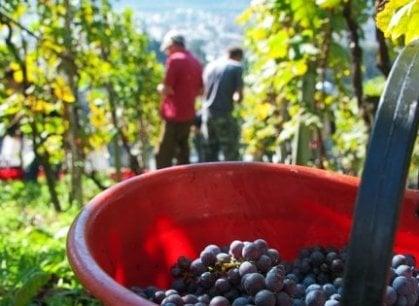 I mille colori del vino in Toscana: quando Chianti e Brunello lo fanno gli immigrati