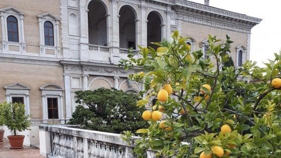 Il miglior limoncello d'Italia? Si fa a Roma, sul terrazzo dell'ambasciata francese