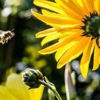 Efsa conferma rischi, tre pesticidi nocivi per le api
