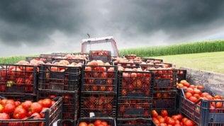 Pomodoro, al via l'etichetta obbligatoria