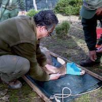 I cervi tornano a popolare Sardegna e Corsica
