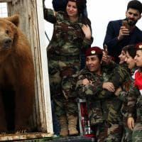 Iraq, orso trovato in una casa privata: liberato dalle soldate Peshmerga