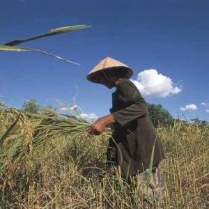 Laos, il 96% degli agricoltori con il sangue avvelenato da pesticidi ed erbicidi