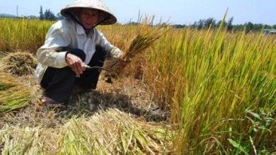Laos, Il 96% degli agricoltori  con il sangue avvelenato da pesticidi