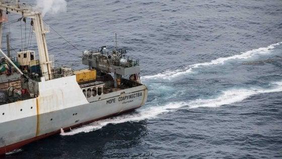 Antartide, la pesca industriale toglie cibo a pinguini e balene