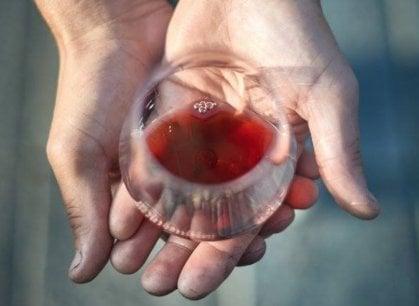 Pelaverga, Quagliano e Chatus: quei vini di Saluzzo rari e (quasi) sconosciuti