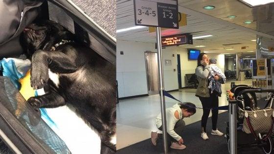 United Airlines, muore cane costretto a viaggiare nella cappelliera