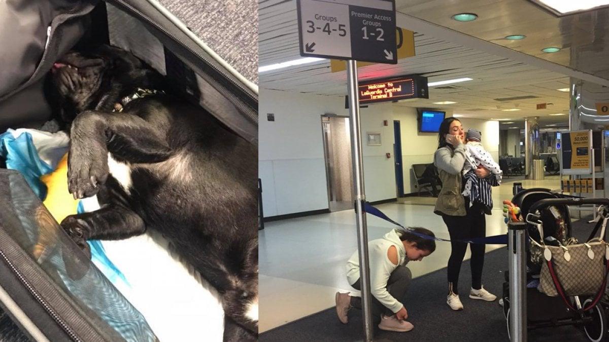 United airlines muore cane costretto a viaggiare nella for Animali domestici della cabina di nashville
